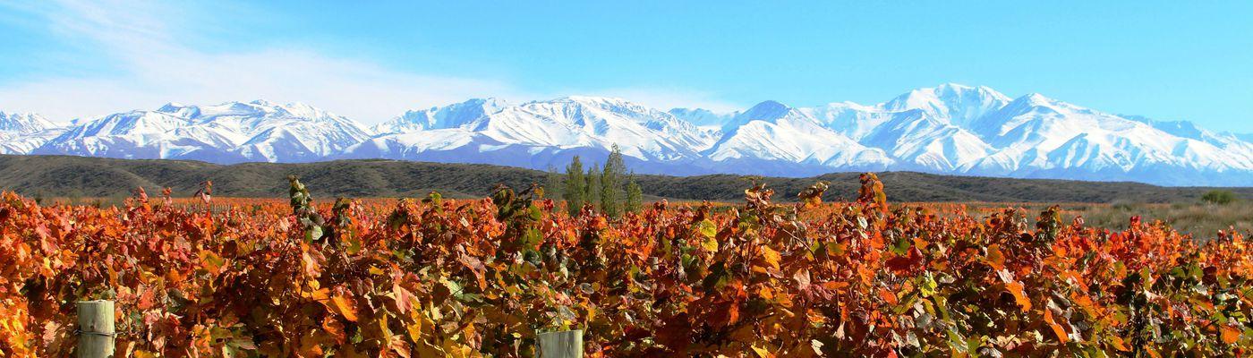 Argentinien Mendoza Wein&Berg aroma1