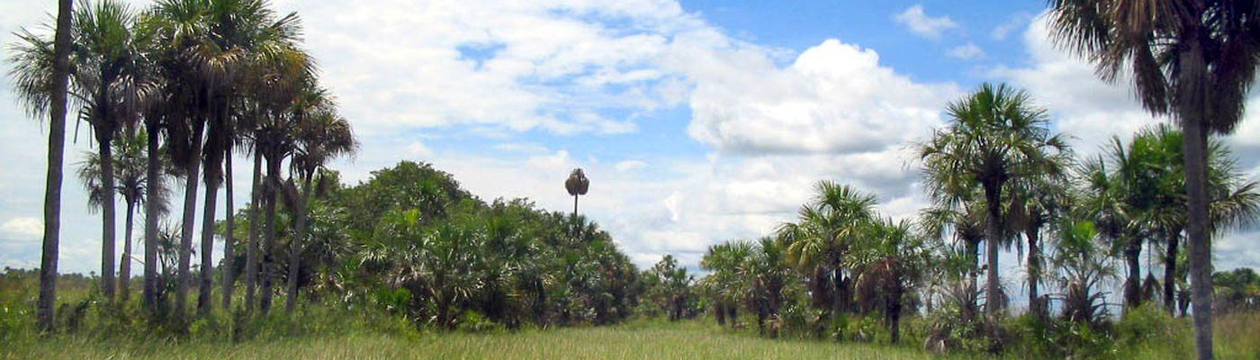 Kolumbien Los Llanos Landschaft