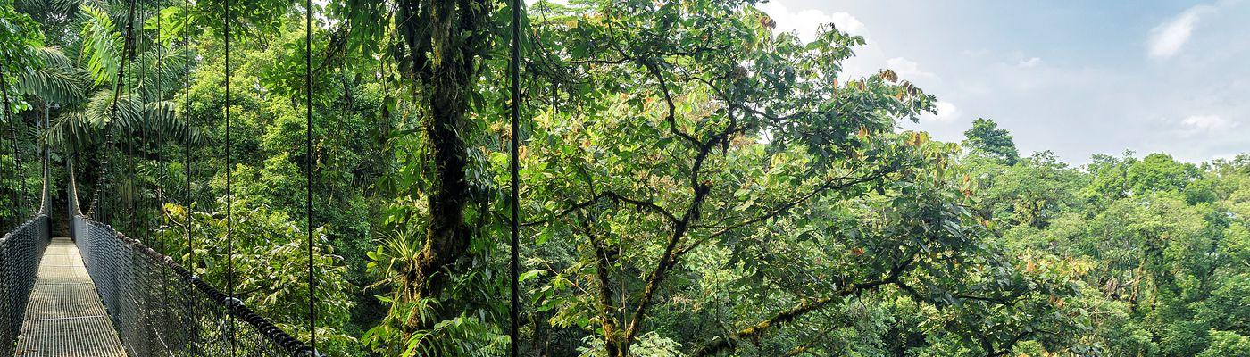 Brasilien Amazonas Hängebrücke iStock 842639568