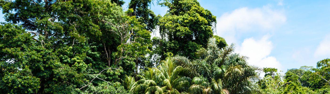 Costa Rica Tortuguero iStock 1003143234