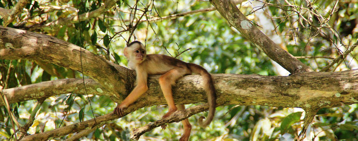 brasilien amazonas affe7