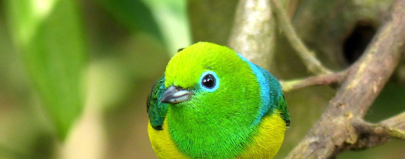 Brasilien Foz do Iguazu Vogel Aromabild