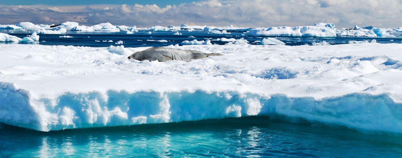 Argentinien Antarktis Eisberg Ravas Aromabild