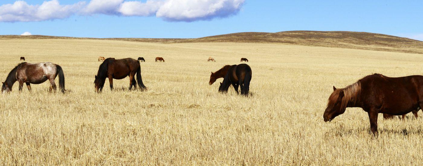 argentinien Ombu pferde Aromabild 2