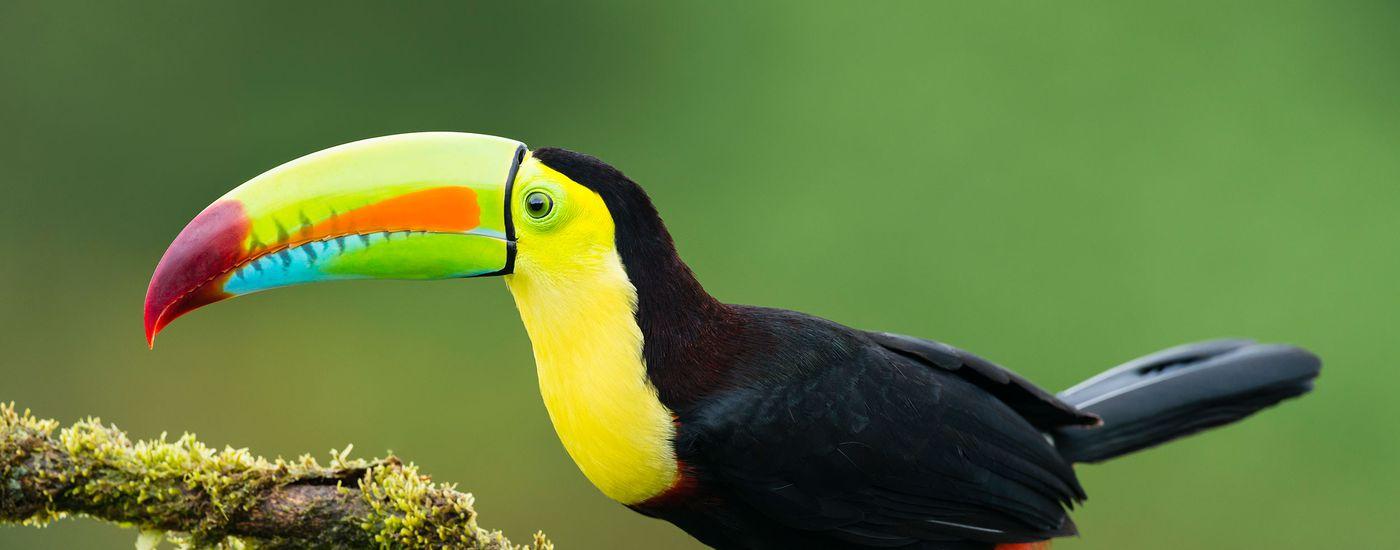 Costa Rica Naturjuwel3