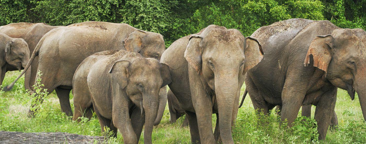Sri Lanka Gruppe Aromabild