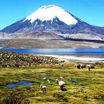 Chile Lauca Nationalpark Lago Chungara 2