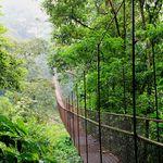 Panama Boquete Hanging Bridges (3)