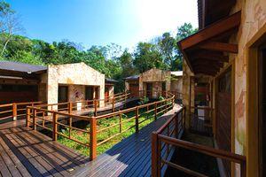 Argentinieni guazu tukan regenwald