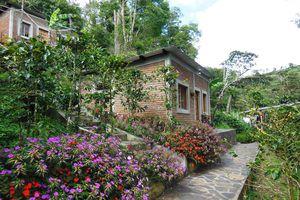 Nicaragua Matagalpa gruene Landschaft
