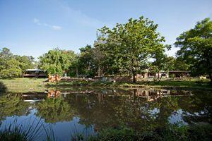 Indien Mudumalai Reh Wild Kitz Entdeckung Safari