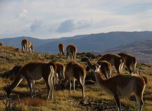argentinien ruta 40 viconas