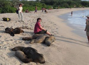 gps mit seloewen am strand