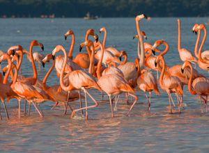 tag 11 flamingos