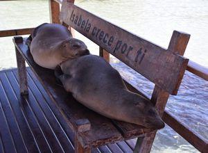 Galapagos Isabela Seeloewen