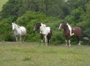 uruguay estancia guardia del monte pferde