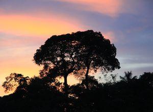 Brasilien Amazonas Sonnenuntergang Baum