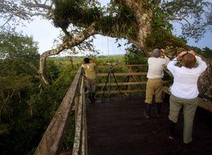 ecuador amazonas sacha lodge platform