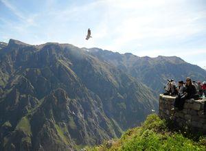 peru colca canyon cruz del condor
