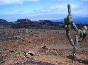 ecuador galapagos isabela sierra negra kaktus