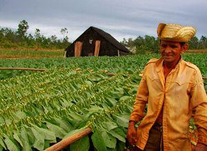 kuba vinales tal tabakplantage mit farmer H9ToQAu