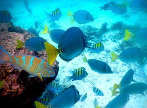 Unterwasserwelt der Galapagosinseln