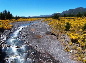 Argentinien Weg nach San Martin de los Andes Torrenegra