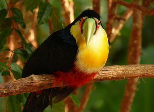 Argentinien Nationalpark Iguazu