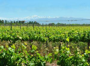 Argentinien Mendoza Weintour