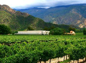 Argentinien Cafayate Weinregion