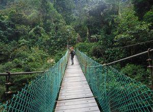 Kolumbien Ciudad Perdida Hängebrücke