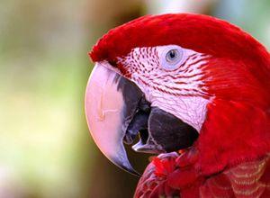 Brasilien Amazonas Papagei Aromabild