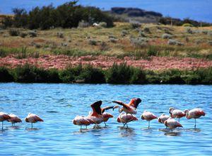 Argentinien El Calafate Laguna Nimez Flamingos