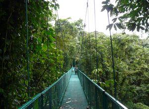 Selvatura Walkways (2)
