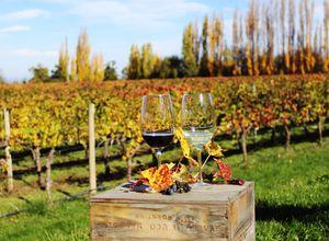 Argentinien Mendoza Weinglas