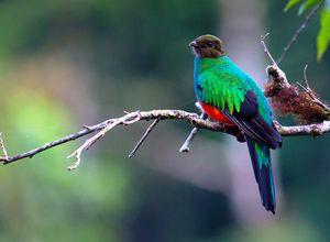 Costa Rica Quetzal Joao Quental