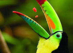 Costa Rica Tourcan