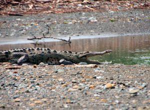 Costa Rica Corcovado Krokodil