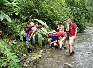 Costa Rica La Leona La Leona Ecolodge Corcovado Nationalpark