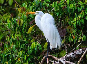 Guatemala Rio Dulce Vogel