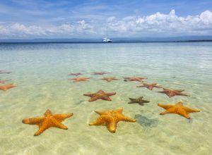 Panama Bocas del Toro Seesterne