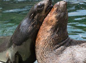 Mexiko Baja California Seelöwen iStock 868535442