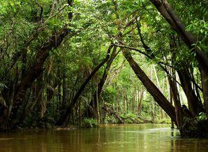 Brasilien Amazonas Naturschönheit