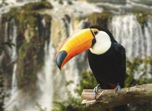 Brasilien Foz do Iguazu Wasserfälle Tukan
