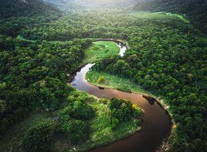 Brasilien Manaus Regenwald