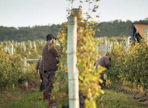 uruguay Weingut Arbeiter