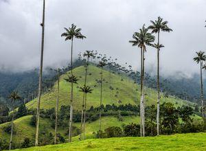 Kolumbien Cocora Tal