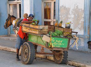 Kuba Mann Erfinderisch Pferdewagen Obst