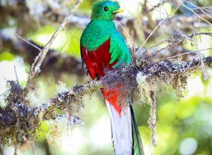 Costa Rica Quetzal