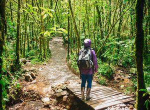 Costa Rica Dschungel Regenwald WEB iStock 514103158
